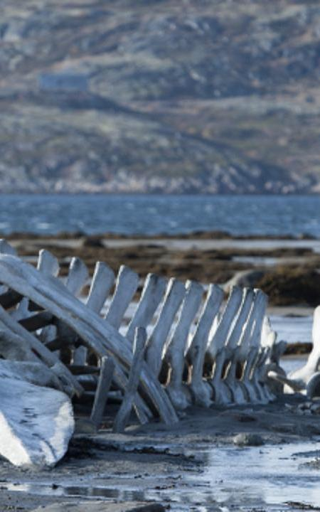 Zvyagintsev's Leviathan First Image