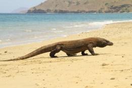 Bermain di pantai P. Komodo