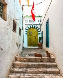 Tunisia tunis medina doorways