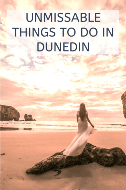 unmissable things to do in Dunedin