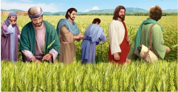 Bacaan Injil : Mrk 2:23-28 Hari Sabat diadakan untuk manusia dan bukan manusia untuk hari Sabat