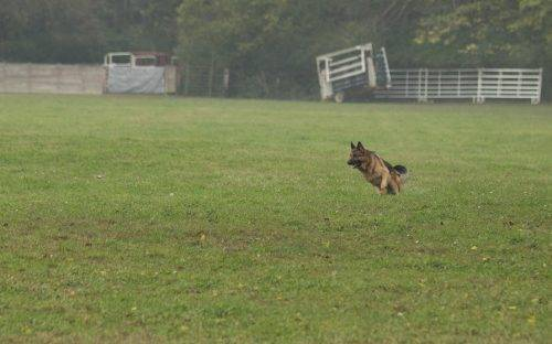 aiden-lure-coursing-2