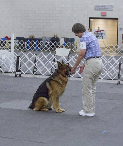 aiden-obedience-5