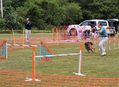6-16-17 Aiden at the CCKC Agility Trial (1)