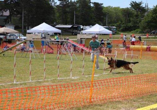 6-16-17 Aiden at the CCKC Agility Trial (15)