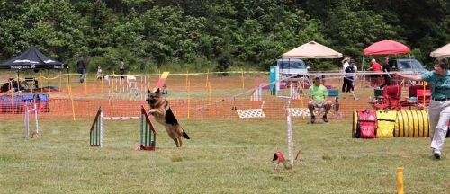 6-16-17 Aiden at the CCKC Agility Trial (21)