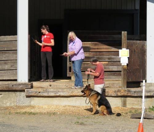 6-25-17 Alta-Tollhaus Aiden - Farm Dog Test 2 (1)