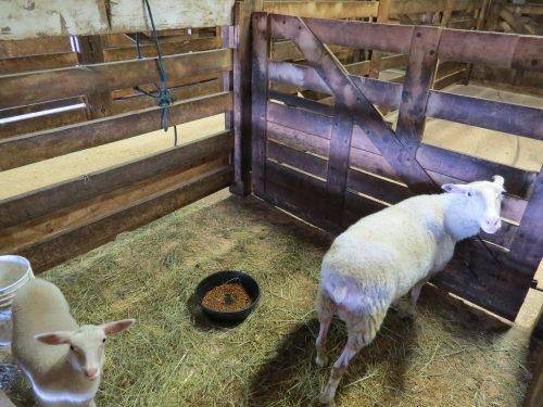 6-25-17 Farm Dog Test 1 (12)