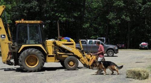 6-25-17 Farm Dog Test 1 (30)