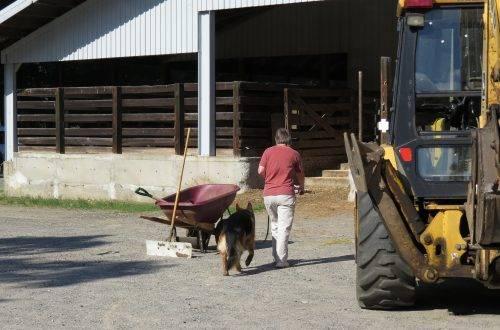 6-25-17 Farm Dog Test 2 (18)