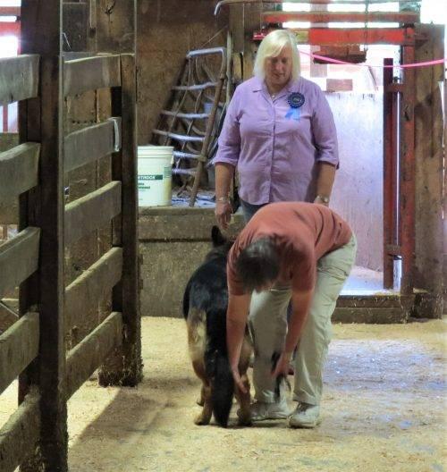 6-25-17 Farm Dog Test 2 (28)