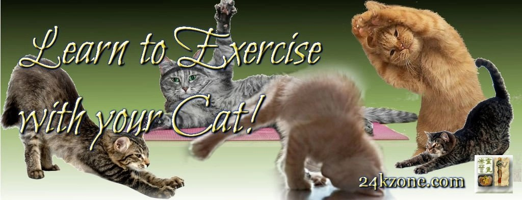 Learn to exercise with your cat