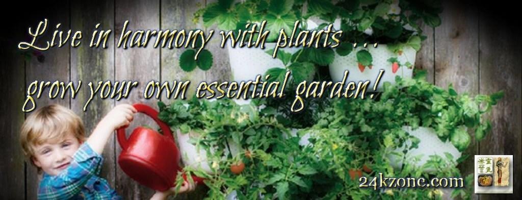 Grow your own essential garden