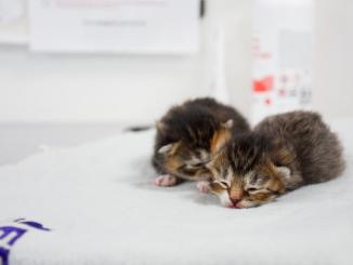 katte killinger