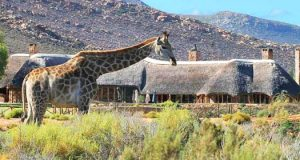 African Safari Holiday, Cape Town
