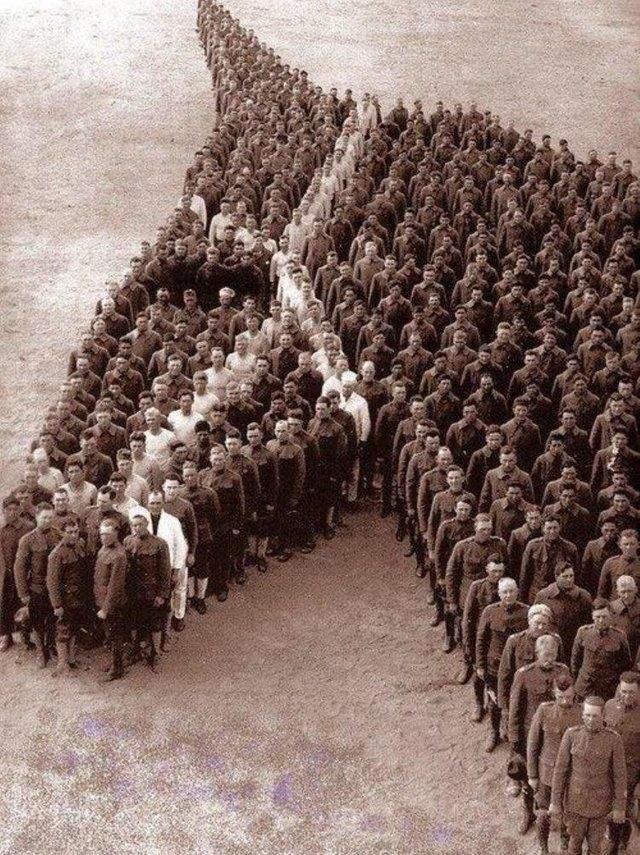 Вшанування загиблих під час війни тварин