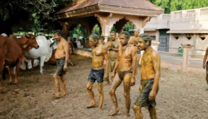 করোনা ঠেকাতে গোবর থেরাপি! সতর্ক করল চিকিত্সক সংগঠন