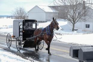 Zwei Sitzbänke hat die schmale Kutsche der Amish People. Das kann eng werden, denn solange die Kinder noch klein sind, fährt die ganze Familie in einem Buggy. Größere Kinder nutzen auch schon mal ein eigenes Pony-Gespann oder reiten mit dem Pony zum Gottesdienst. Mit 16 bekommen die Jungen normalerweise einen eigenen Buggy samt Pferd.