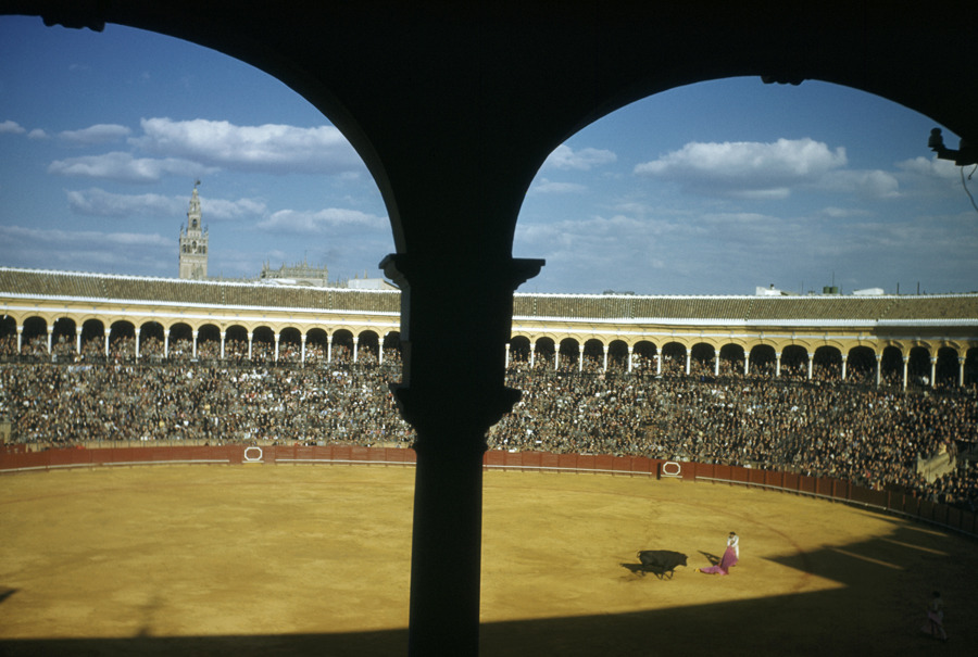 A bullfighter waves red cape in front of a bull and a crowded stadium in Seville, Spain, April 1951.Photograph by Luis Marden, National Geographic