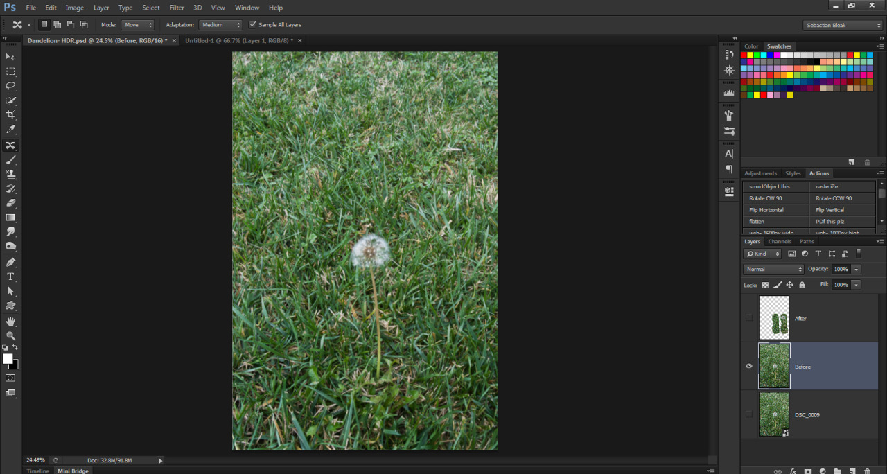 Dandelion in grass photograph