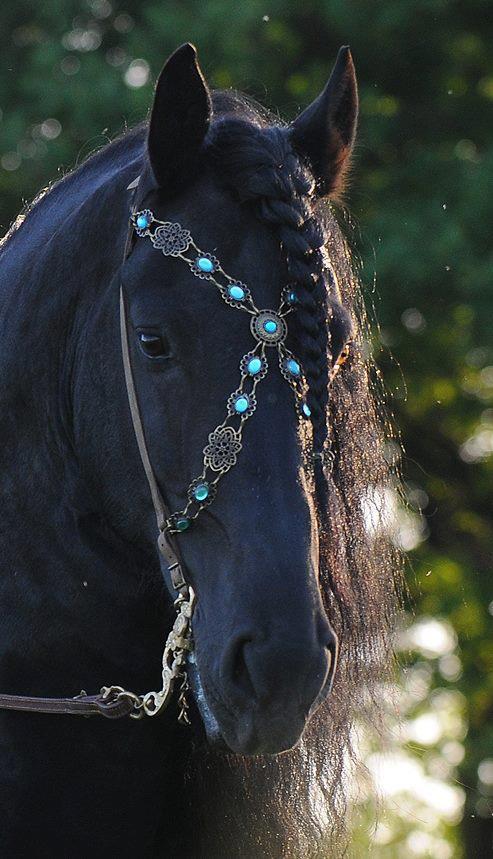 breakfastattegans: (via Les chevaux et la coquetterie ♥) Beautiful betsel, vackra häst.