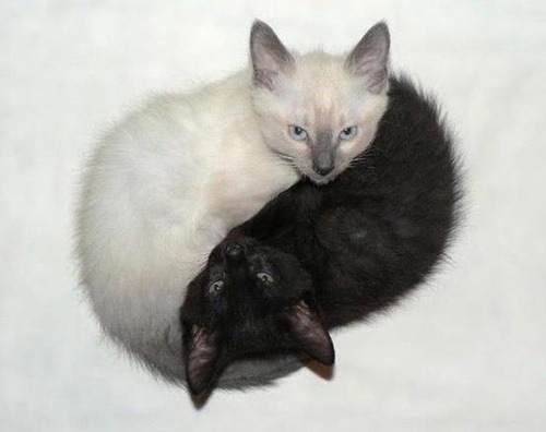 PERFECT HARMONY<br /> The two cats nestled together, white around black, depict the harmony of Yin and Yang.<br /> Nature has a way of balancing its creations to achieve the ultimate harmony.<br /> We can learn from nature to surround ourselves with beauty and balance, instead of constant noise, and confusion.<br /> Life doesn't have to be filled with pain and unhappiness. We have to search for the right balance in our lives that will bring us greater peace and feelings of accomplishment.