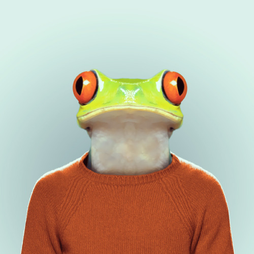 FROG by Yago Partal for ZOO PORTRAITS