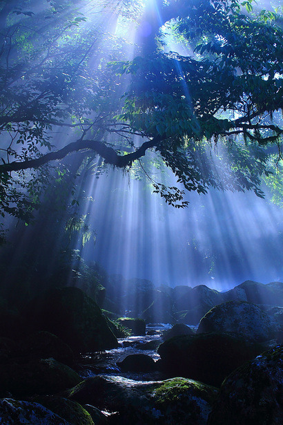 nature forest mystical Ethereal etherealsanctuary