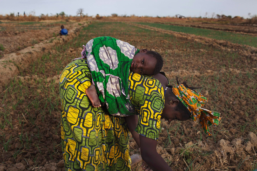Farmer Bintou Samake plants beans while carrying her son Mahamadou on her back on a farm in Heremakono on January 22, 2013. (Joe Penney/Reuters)