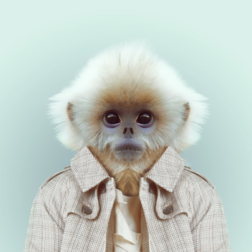 MONKEY by Yago Partal for ZOO PORTRAITS