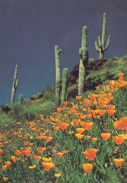 Between the cacti grows flowers.<br /> Amid the dryness sprouts life.<br /> Spots of color to brighten the horizon.<br /> In the midst of despair,<br /> hope springs to life.<br /> Life not only give us darkness,<br /> but also gives us flashes of light to guide us<br /> to better times ahead.<br /> Here's to hope!