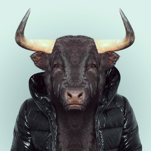 BULL by Yago Partal for ZOO PORTRAITS