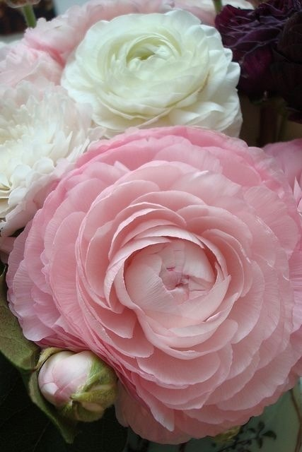 A BEAUTIFUL ROSE<br /> PERFECTION<br /> THERE IS NOTHING MORE TO SAY