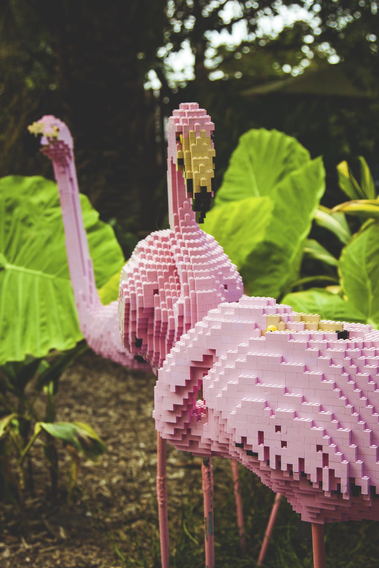 The Zoos of Tomorrow - Lego Pink Flamingos