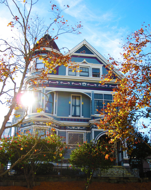 Fall is in the air. Alamo Square, San Francisco, CA.<br /> Happy Thanksgiving!