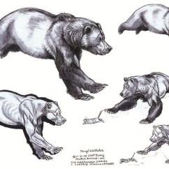 Panda Life Cycle Diagram 1997 Ford Escort Wiring Anatomy Vs Tiger Elsavadorla