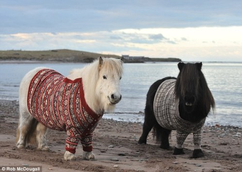 the pony in the red sweater represents emotional growth.