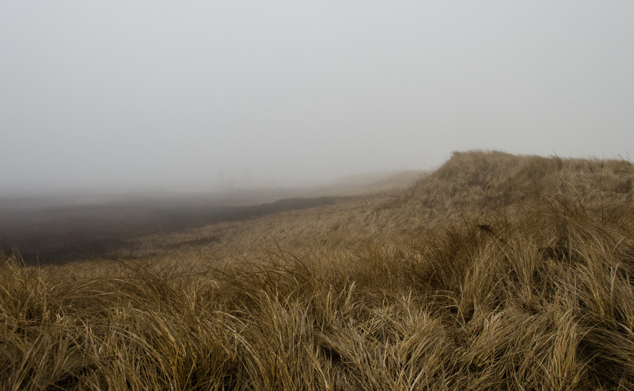 Feb 21, 2014 - the foggy view behind the dunes on the east side
