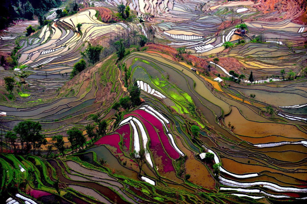 wnycradiolab:</p> <p>the remote and little known rice terraces of yuanyang county in china's yunnan province were built by the hani people along the contours of ailao mountain range during the ming dynasty five hundred years ago. the terraces, once planted during the early spring season, are then irrigated with spring water from the forest above, which reflect sunlight to create the images seen here.<br /> photos by jialiang gao, javarman, isabelle chauvel and thierry bornier</p> <p>A work of art created by fields of rice.