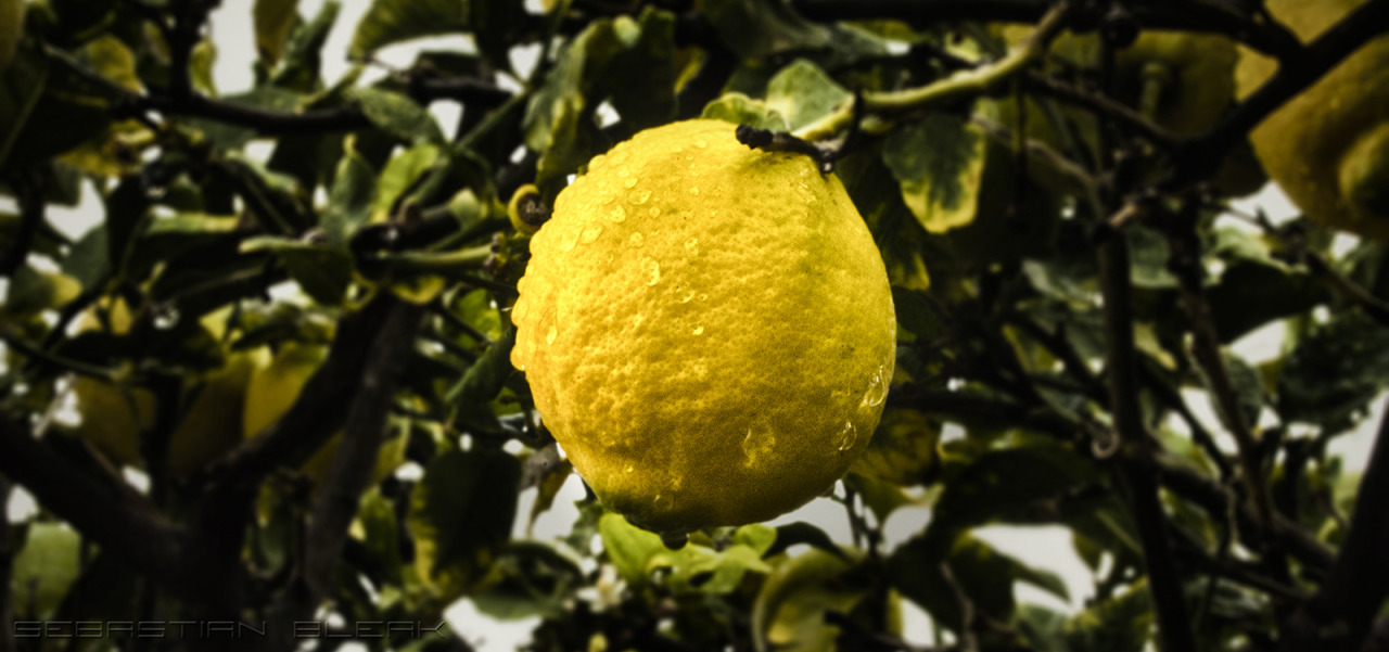 HDR Lemon in Adobe Photoshop CS6