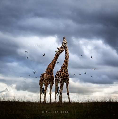 "magicalnaturetour:</p><br /><p>""Wildscape"" by Marina Cano :)"