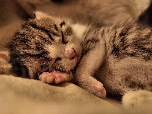 Good night sleepy head.