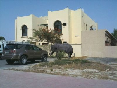 Elephant in Dubai
