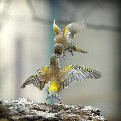 طير يطعم طيراً آخر