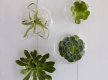Plants Turned into a Work of Art - Its Overflowing