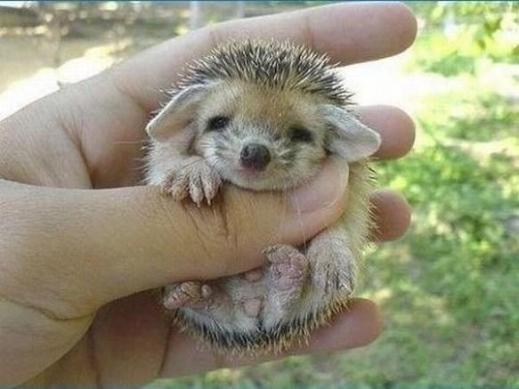 Moral Of The Hedgehog