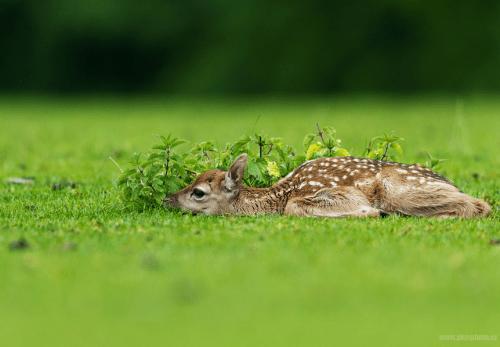 ecocides: Hidden fawn | image byPeter Krejzl