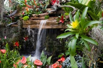 rewards of life diy tropical garden