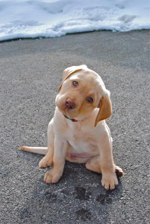 Curious Pup   OutOfTheCrabBucket.com