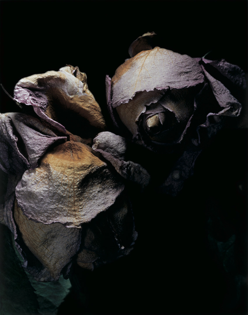 farewell-kingdom:</p> <p>David Sims - Roses</p> <p>NOTHING LASTS FOREVER.